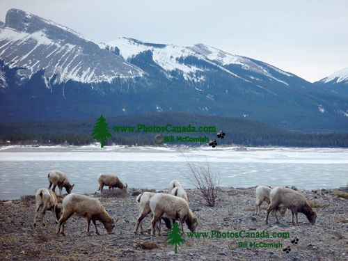 Abraham Lake, Alberta, Canada 06