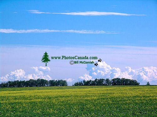 Alberta Prairies, Canada 15