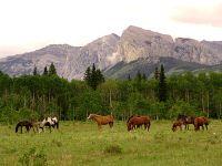 Exshaw, Ranch, Alberta, Canada 14