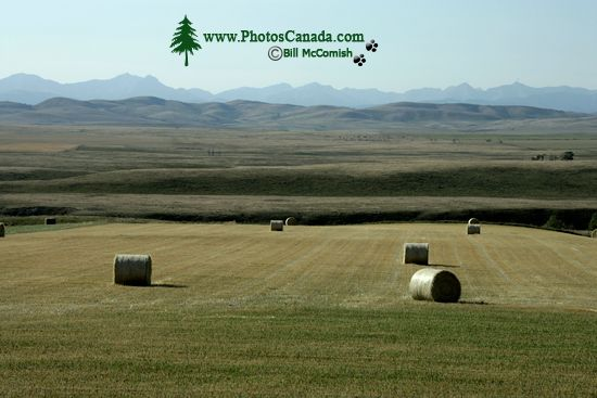 Hayfield, Southwest Alberta CM11-23