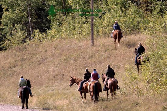 Trailride, Southwest Alberta CM11-22