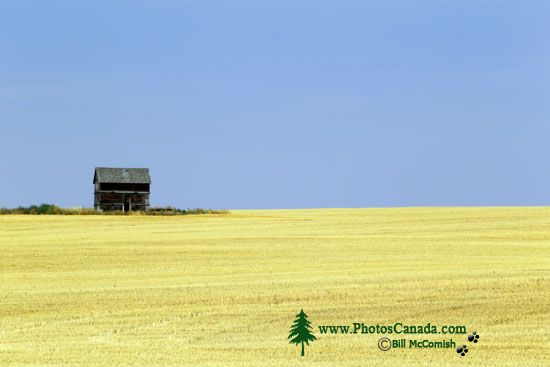 Alberta Wheatfield, Canada CMX-001