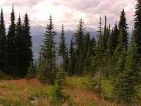 Alpine Wildflowers, Mount Revelstoke National Park, British Columbia, Canada 02