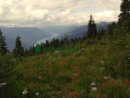 Alpine Wildflowers, Mount Revelstoke National Park, British Columbia, Canada 03