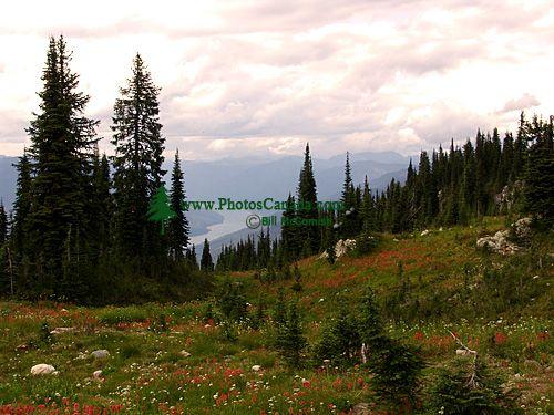 Alpine Wildflowers, Mount Revelstoke National Park, British Columbia, Canada 04