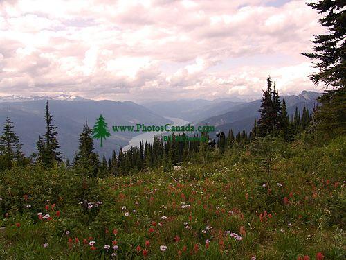Alpine Wildflowers, Mount Revelstoke National Park, British Columbia, Canada  08