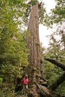 Ancient Red Creek Fir, Port Renfrew Region, Vancouver Island CM11-004