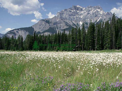 Cascade Mountain, Banff National Park, Alberta, Canada CM11-01