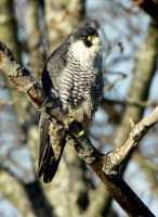 Reifel Migratory Bird Sanctuary CM11-032