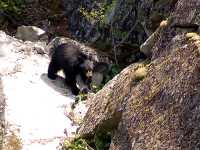 Black Bear 19