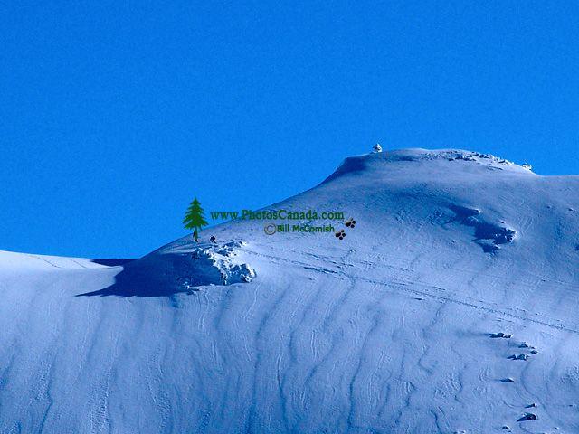 Blackcomb, Blackcomb Glacier, British Columbia, Canada 04
