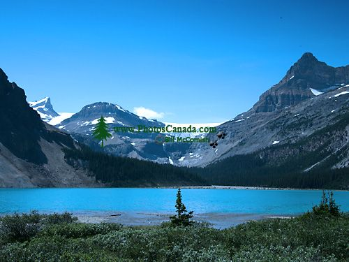Bow Lake, Icefields Parkway, Jasper National Park, Alberta, Canada CM11-04