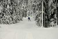 Callaghan Valley, Cross Country Skiing, Whistler, British Columbia, Canada, CM11-07