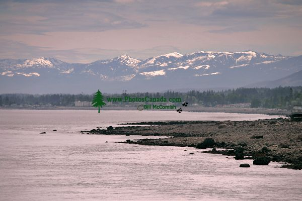 Campbell River, Vancouver Island, British Columbia, Canada CM11-17