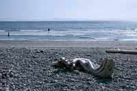 China Beach, Strait of Juan de Fuca, Vancouver Island CM11-003