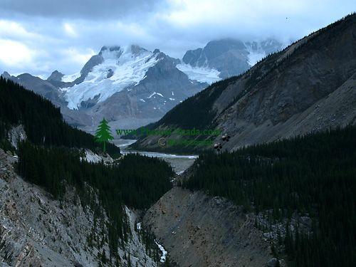 Columbia icefields, Icefields Parkway, Jasper National Park, Alberta, Canada CM11-04