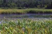 Cypress Hills Provincial Park, Alberta, Canada CMX-002