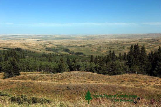 Cypress Hills Provincial Park, Alberta, Canada CMX-006