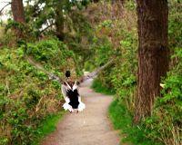 Ducks at Reifel Bird Migratory Sanctuary 02