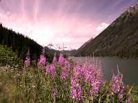 Duffey Lake, Duffey Lake Road, Lillooet To Pemberton, British Columbia, Canada CM11-12