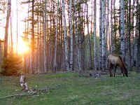 Elk 09