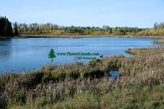 Elk Island National Park, Alberta, Canada CM-01