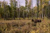 Elk Island National Park, Alberta, Canada CM-06