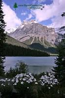 Highlight for Album: Emerald Lake, 2011, Yoho National Park, British Columbia, Canada - Canadian National Park Stock Photos
