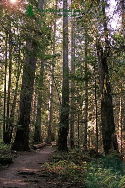 Englishman Falls Park, Parksville, Vancouver Island CM11-008