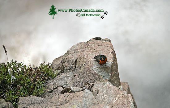 Fintry Falls, Okanagan Lake, British Columbia, Canada CM11-004