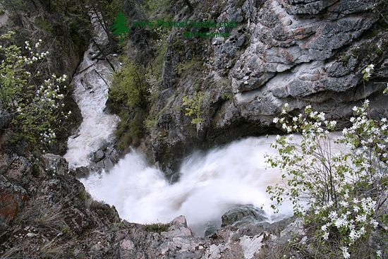 Fintry Falls, Okanagan Lake, British Columbia, Canada CM11-005