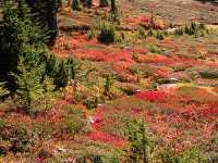 Mt Garibaldi Provincial Park, British Columbia, Canada  14