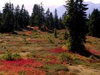 Mt Garibaldi Provincial Park, British Columbia, Canada  12
