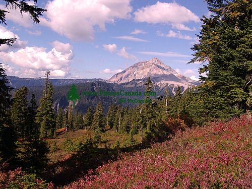 Mt Garibaldi Provincial Park, British Columbia, Canada  06