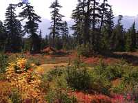 Mt Garibaldi Provincial Park, British Columbia, Canada  05