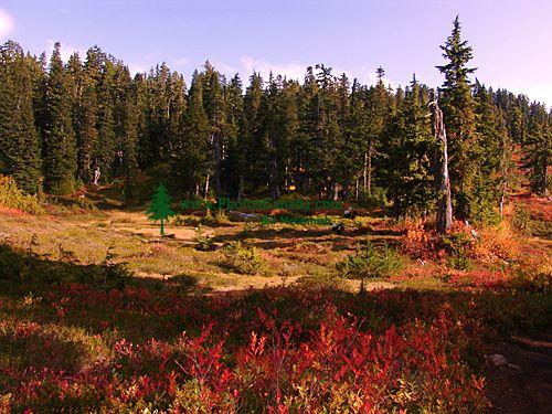 Mt Garibaldi Provincial Park, British Columbia, Canada  03