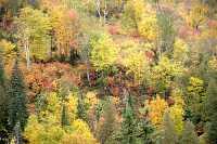 Gaspe Peninsula, Fall Colours, Quebec, Canada CM11-05