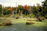 Gatineau Park, Ottawa, Canada's Capital Region CM11-06