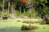 Gatineau Park, Ottawa, Canada's Capital Region CM11-07