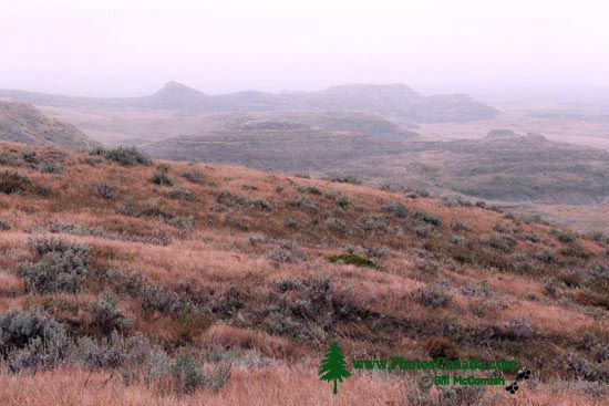 Grasslands National Park - East Block, Saskatchewan, Canada CMX-004