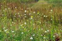 Grasslands National Park - West Block, Saskatchewan, Canada CMX-029