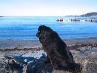 Rocky Harbour, Gros Morne National Park, Newfoundland, Canada 09