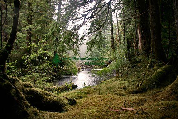 Rainforest, Gwaii Haanas National Park Reserve, British Columbia, Canada CM11-004