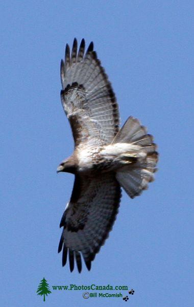 Hawk CM11-01