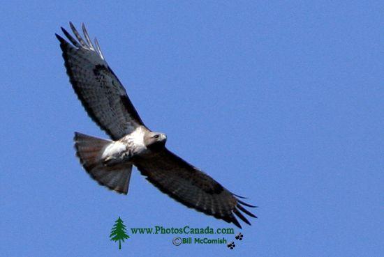 Hawk CM11-02