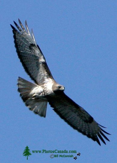 Hawk CM11-03