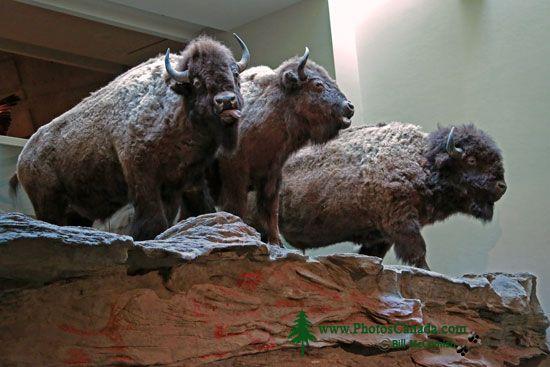 Head Smashed in Buffalo Jump, Alberta, Canada CMX-002
