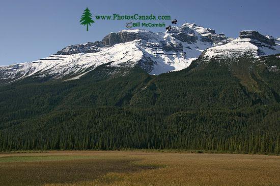 Icefields Parkway, 2011, Banff & Jasper National Parks, Alberta, Canada CM11-005