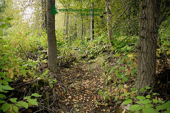 Spooky's Territory, Northern British Columbia, Canada CM11-12