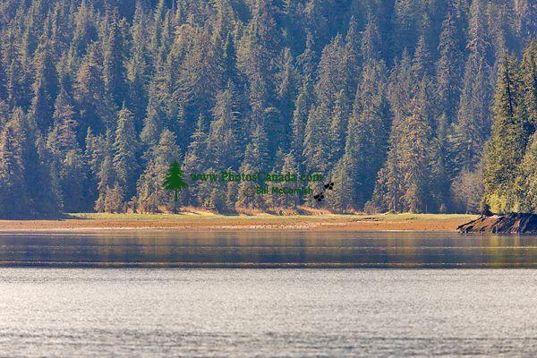 Khutzeymateen Inlet, Gateway To Khutzeymateen Grizzly Sanctuary, British Columbia, CM11-02